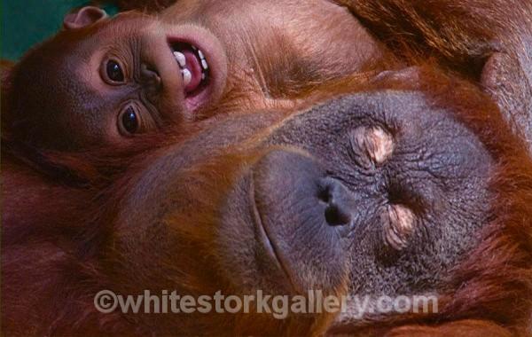 Me and my Mum! - Wildlife and Animals