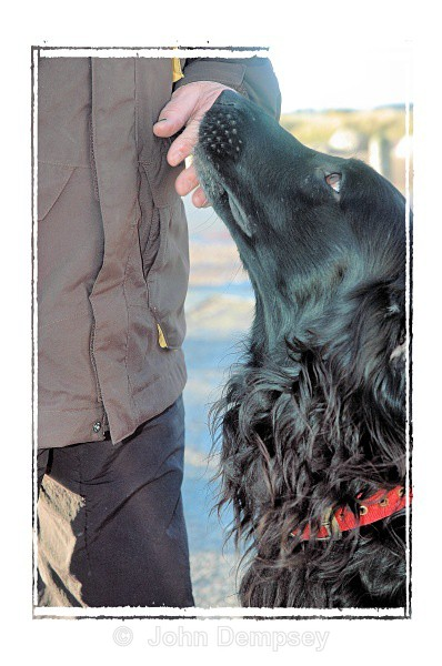 Angus - Walking the Dog