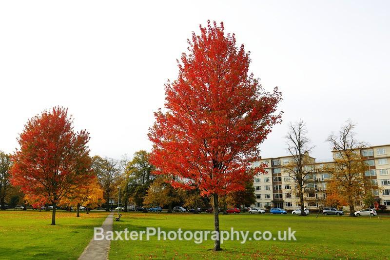 Trees Towards Beech Grove - Harrogate Town