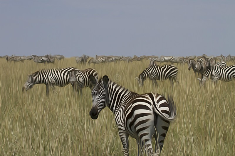 Zebra Horizon - CrazyCat Imagery