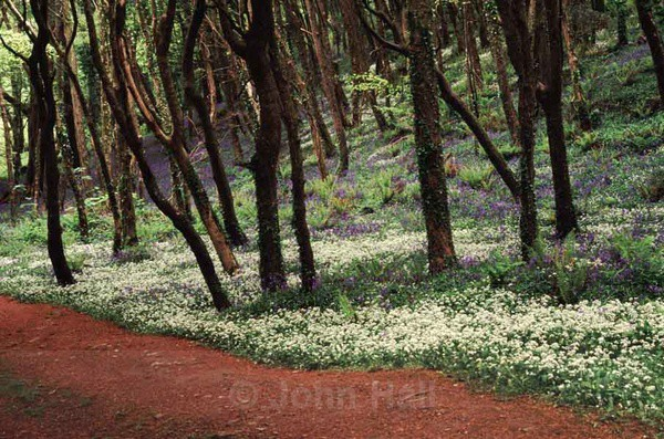 Trees and wildflowers at courtmacsherry woods in spring, co. cork, ireland.