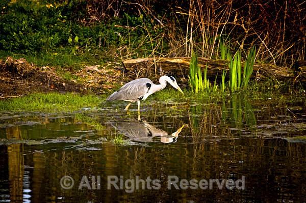 Wildlife1512 - Wildlife Wales