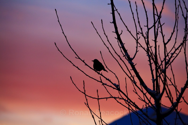Bird at Dawn - Nature