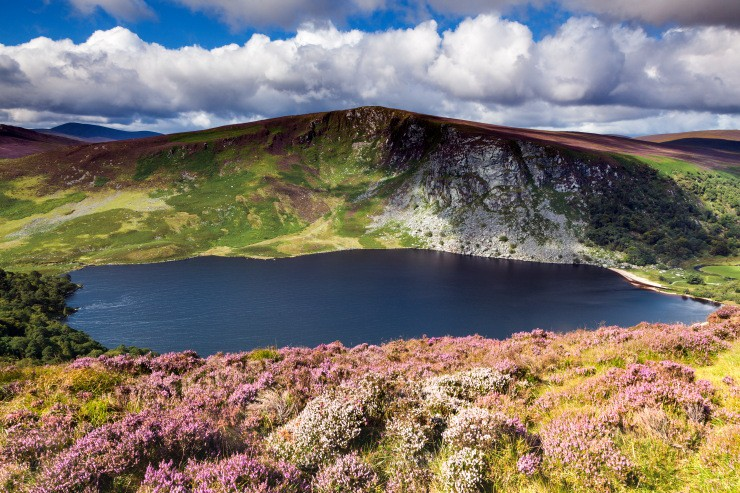 Wicklow Heather Scene 3 - Landscapes of Ireland - Glendalough and the Wicklow Mountains