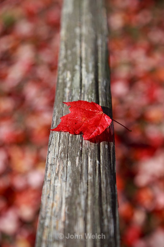 - Fall Foliage Season Transitions