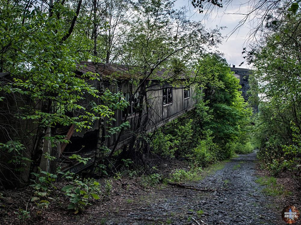 St. Nicholas Coal Breaker (Mahanoy City, PA) | Overgrown Conveyor - St. Nicholas Breaker