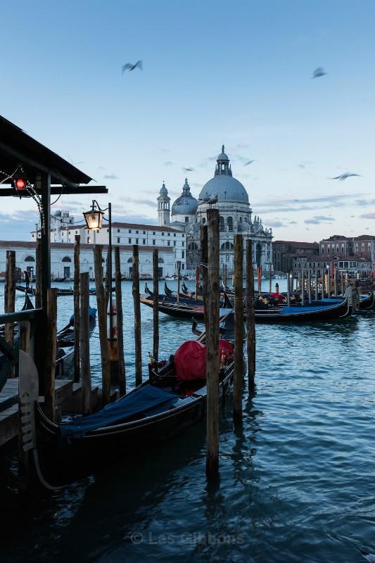 Gondola and birds - Venice