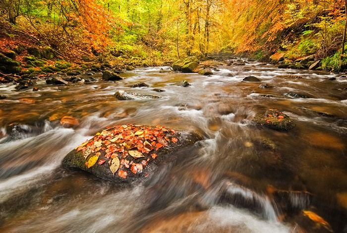 Autumn Woods in The Birks Aberfeldy | Scotland in Autumn