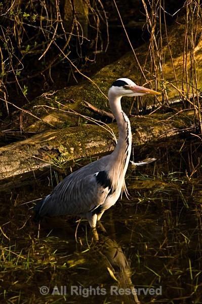 Wildlife1098 - Wildlife Wales