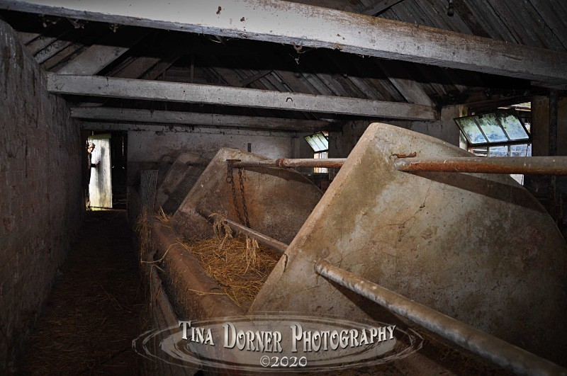 The Cowshed Visitor by Tina Dorner Photography.  Forest of Dean and Wye Valley, Gloucestershire