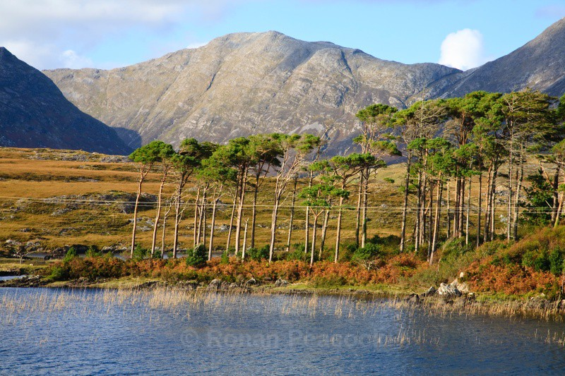 Pine Island - West of Ireland