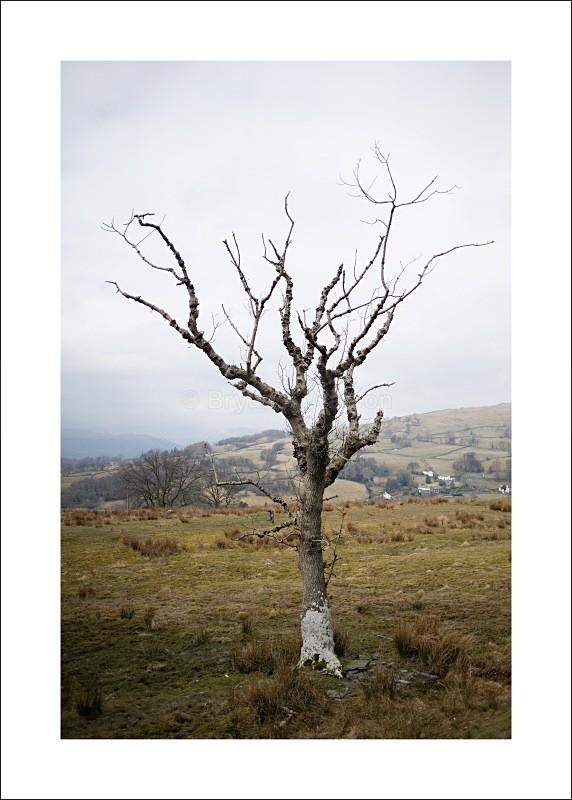 Tree - Landscapes
