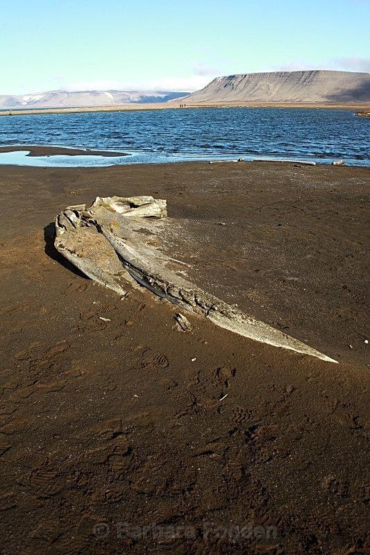 Whale bone 9850 - Summer time