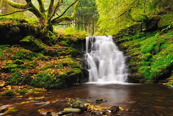 Woodland and Waterfall | Brecon Beacons Tal-y-bont Wales