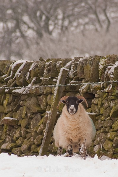Sheltering from the Weather - Animals/ Wildlife
