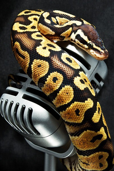 snakies-26 - Reptile Photography