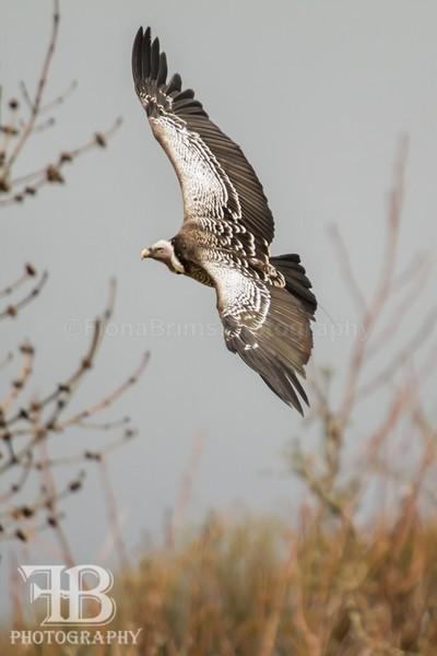 Wow April 5-42 - Birds of Prey