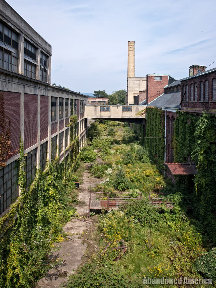 The Scranton Lace Company | Overgrown Courtyard - Scranton Lace Company