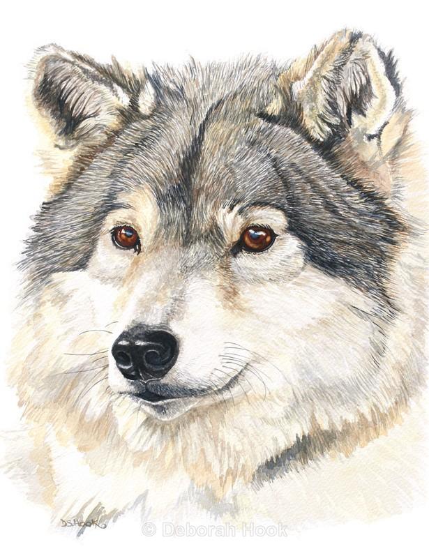 Wolfie - Pets