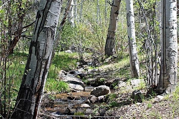 Big Dens Creek - Nevada (mostly) Landscapes
