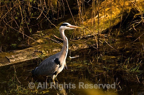 Wildlife1097 - Wildlife Wales