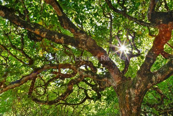 Awakening of the Trees