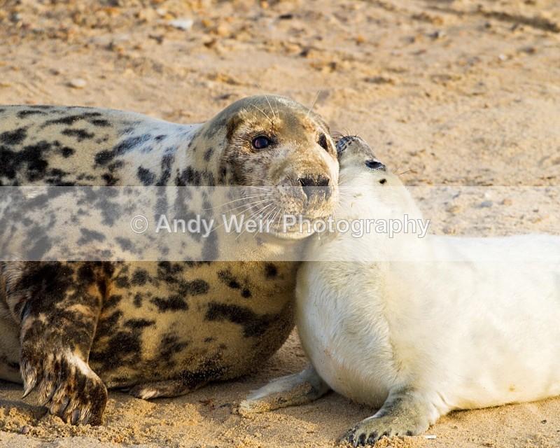 20101128_3723 - Grey Seal