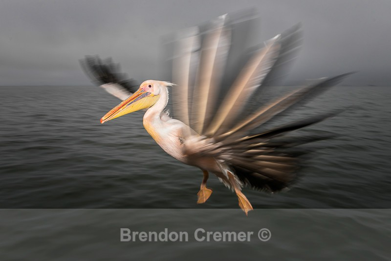 - Feathered Friends of Flight