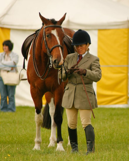 12 - Equestrian Photography