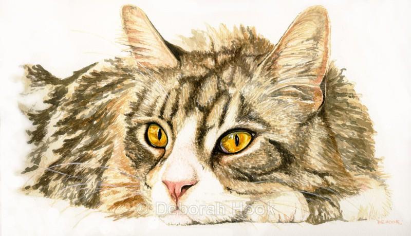 Golden eyes - Pets