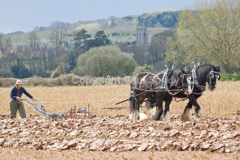 Ann Williams of Poundsgate ploughing with Shires Duke and Lupin. Brampford Speke church on the other side of the River Exe can be seen in the backgrou - Featured Images