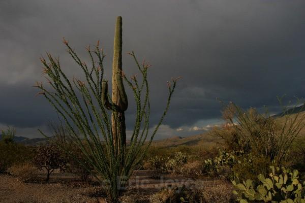 Storm threat - Tuscon, Arizona