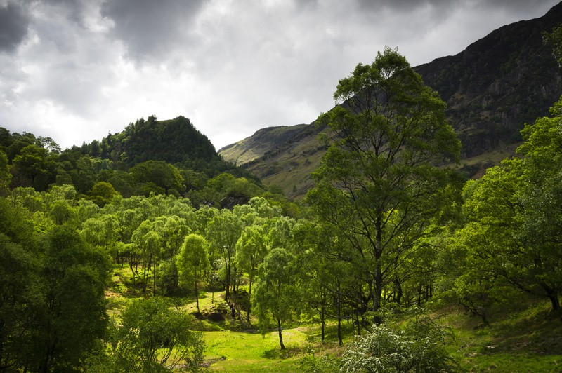 Borrowdale Green - The Lake District