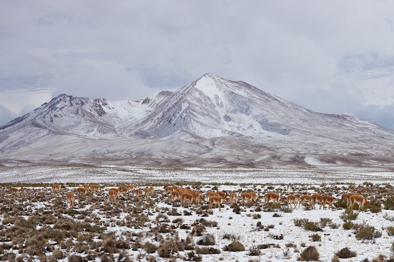 Snow Covered Altiplano - Altiplano of North-East Chile