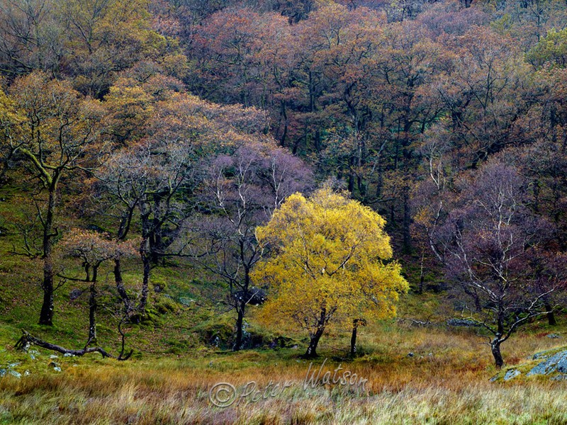 Grange Fell Cumbria - England