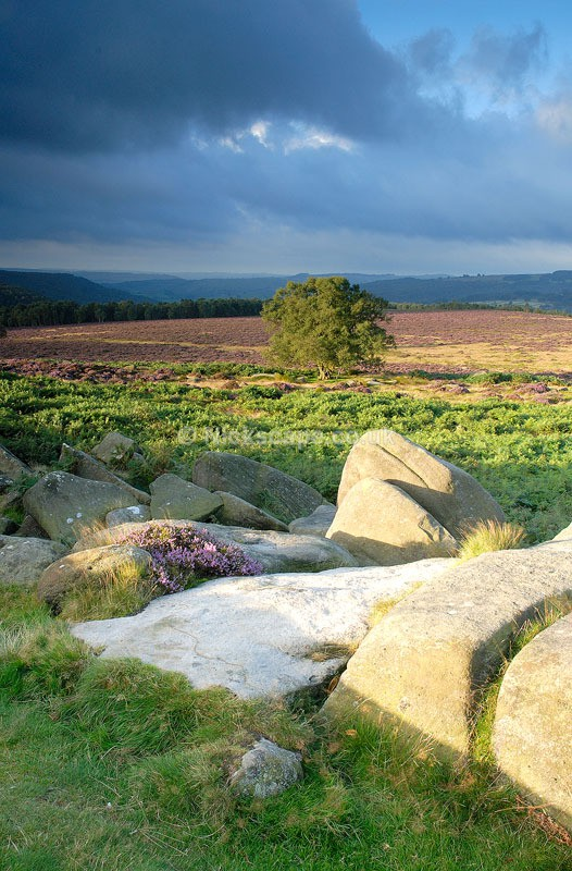 Peak District Scene | Tree at Owler Tor next to Surprise View Car Park | Peaks Photography