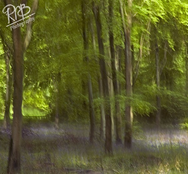 Impression of West Woods - Creative Images