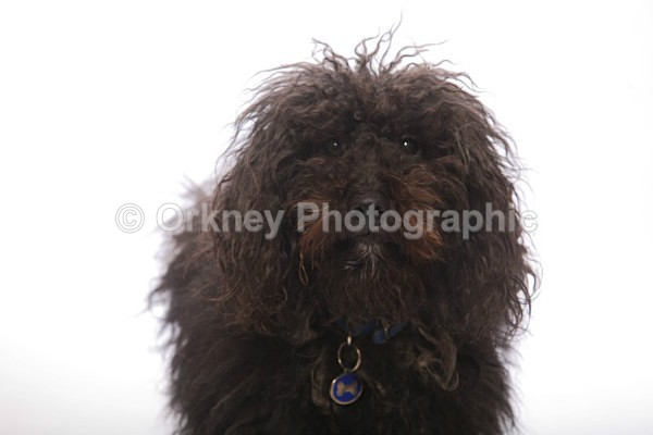 Dog use-5597 - Portrait Examples