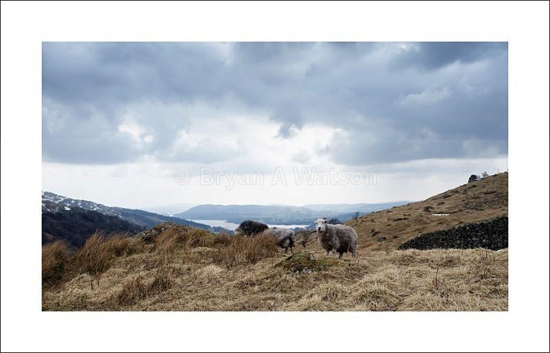 Herdwick - Landscapes