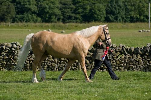 162 - Moniaive Horse Show 2008