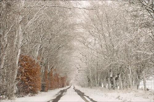 Morton Lane in Winter - Around Thornhill