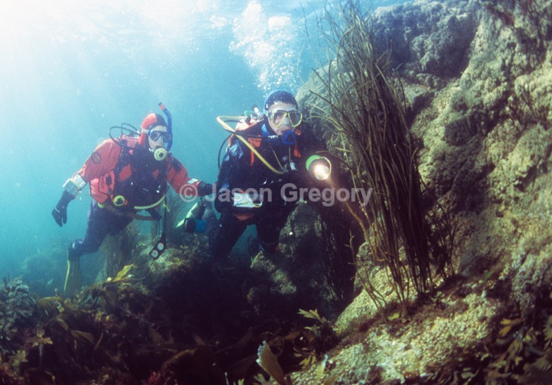 Divers explore shallow area - Diver exploring marine environment