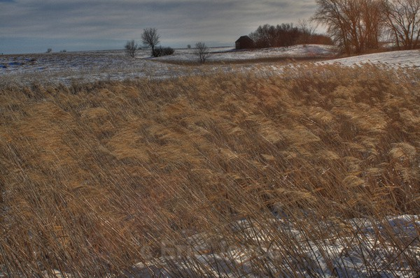 Winter sloughgrass - SW Minnesota