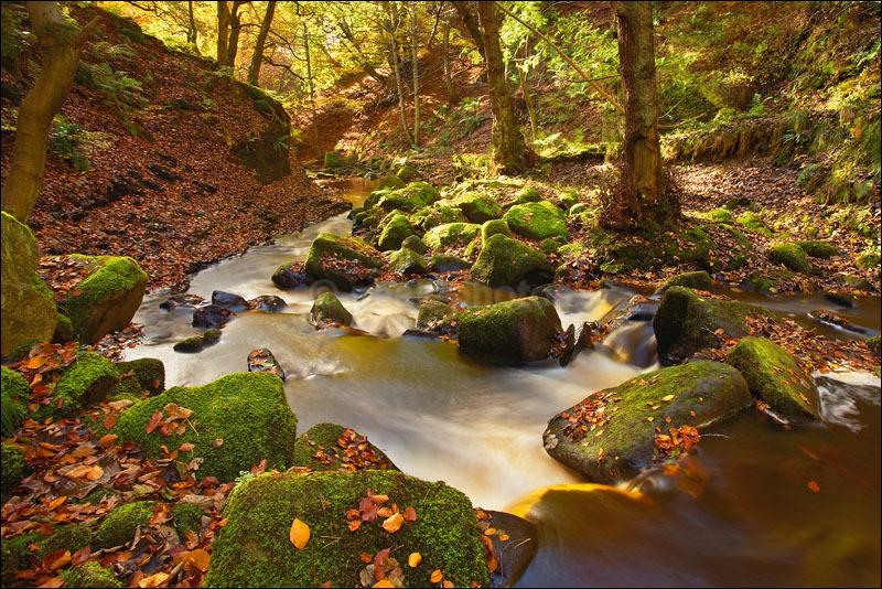 Padley Gorge Autumn - Photographs of Woodland & Rivers