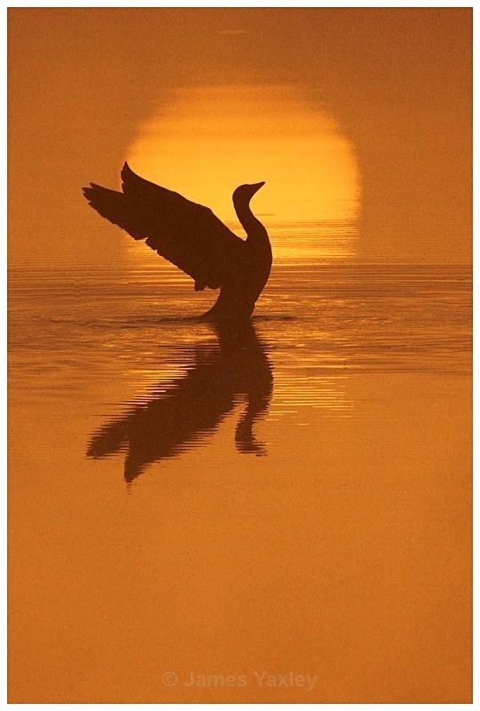 Sunrise Goose 3 - Creative