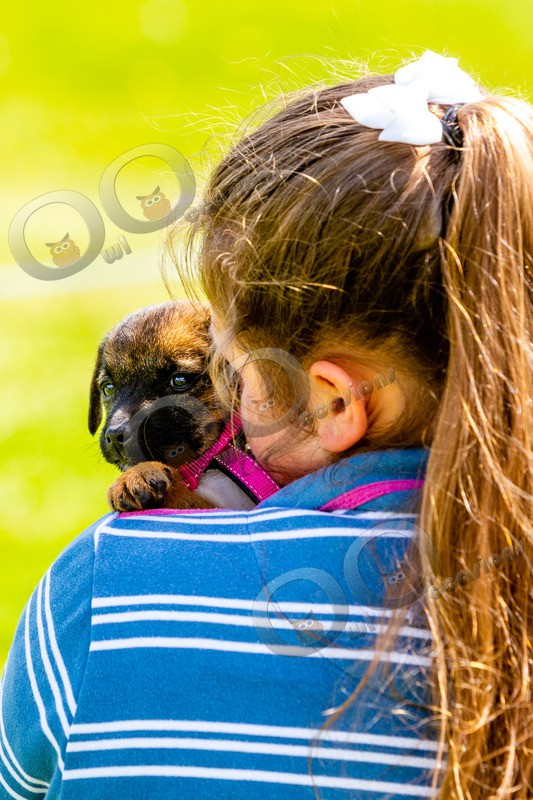 puppy-7683 - Pet Photography