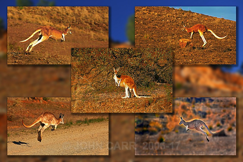 Red Roo Quintych-2 - MONTAGES