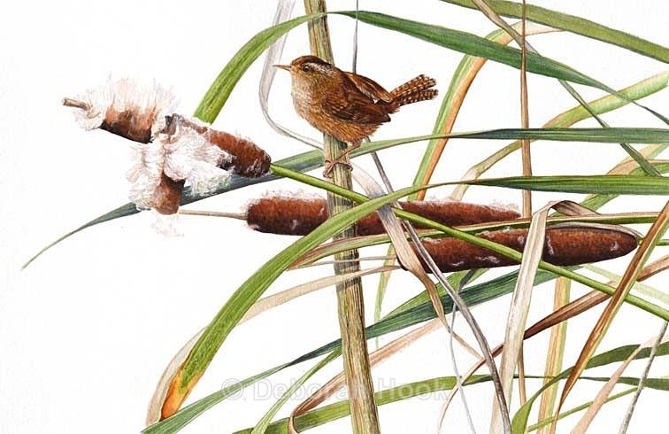 Wren in a rush - Birds