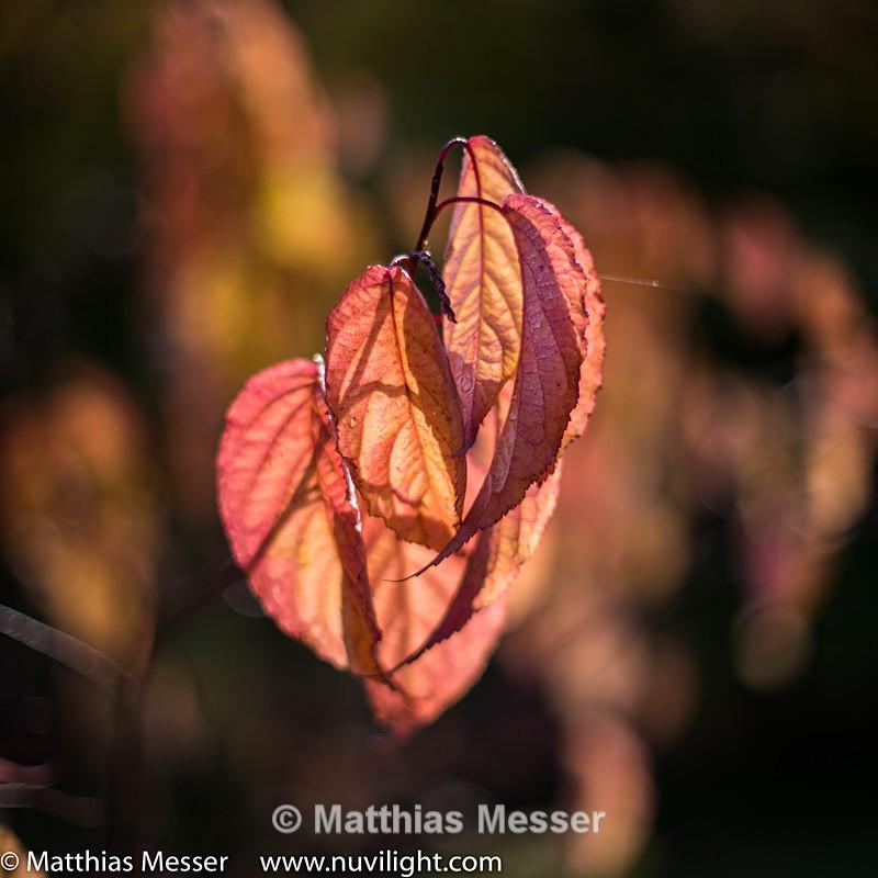 - Nature
