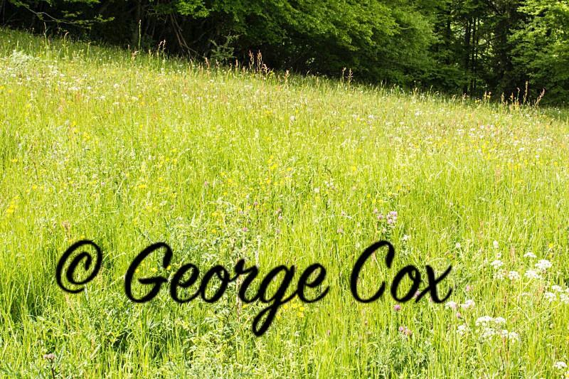 Vercors Meadow - Vercors Landscapes